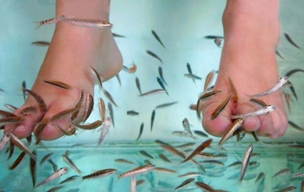 Ictioterapia con peces y masaje podal 19€