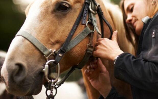 Clases de equitación desde 13€