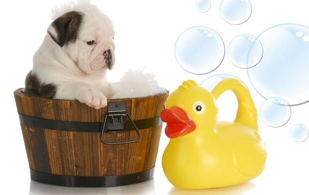 Lavado completo para tu perro por 7€
