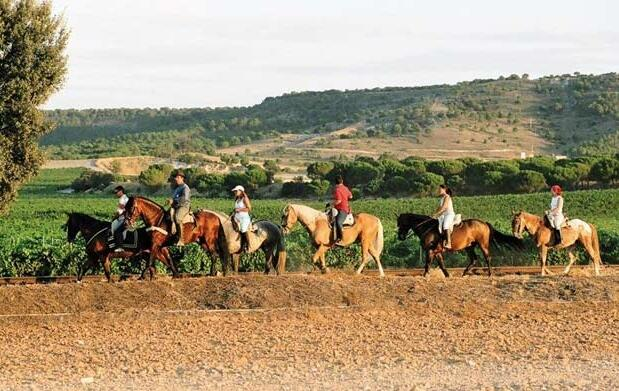 Ruta de 2 horas a caballo por 14,50€
