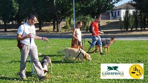 Exclusivo taller de paseo educado y adiestramiento canino, 5 horas