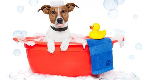 Baño completo para tu perro ¡a mitad de precio!