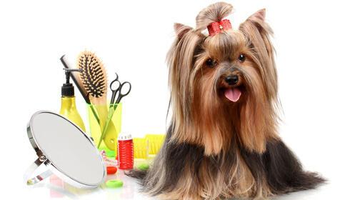 Completa sesión de baño para tu perro a mitad de precio