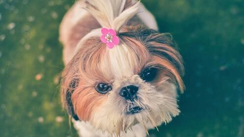 -50% oferta en sesión de baño para tu perro