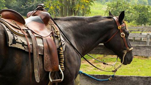 Cumple tu sueño de montar a caballo, 3 clases 16,90€