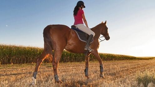Comienza tus clases de equitación con profesores profesionales