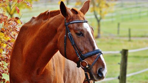 Escuela de hípica, tres clases de equitación