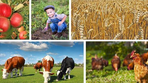 Ven a visitar la granja, actividad de dos horas 10€