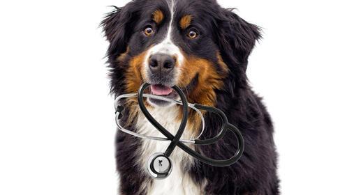 Oferta en vacunación y revisión completa para perro